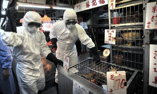 Staff cull chickens in a Hong Kong market on June 7, 2008, after the deadly H5N1 bird flu virus was found (AFP/File, Andrew Ross)