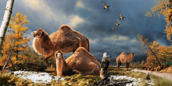 Artists' illustration of the cames that roamed  the High Arctic 3.5 million years ago. Credit ~ J. Csotonyi
