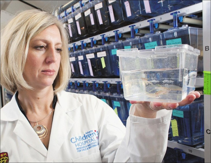 Team led by Deborah Kurrasch has shown bisphenol A and S can alter brain development in zebrafish.