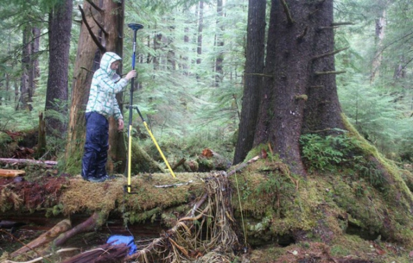 Scientist Lucinda Leonard sets up equipment to assess the way a 2012 tsunami inundated the old growth forest on Haida Gwaii, leaving behind plenty of seaweed and debris visible on the ground ~ NRCan Photo